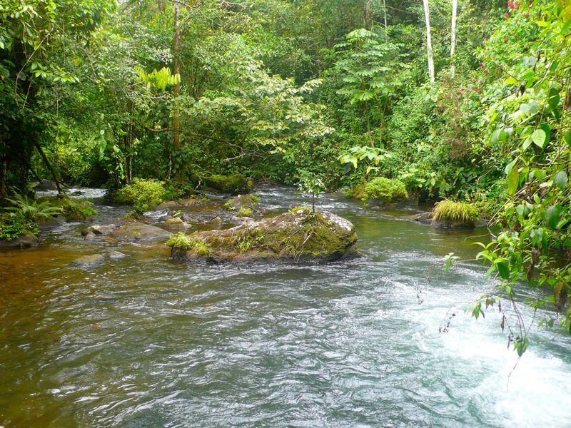 Isla del rio