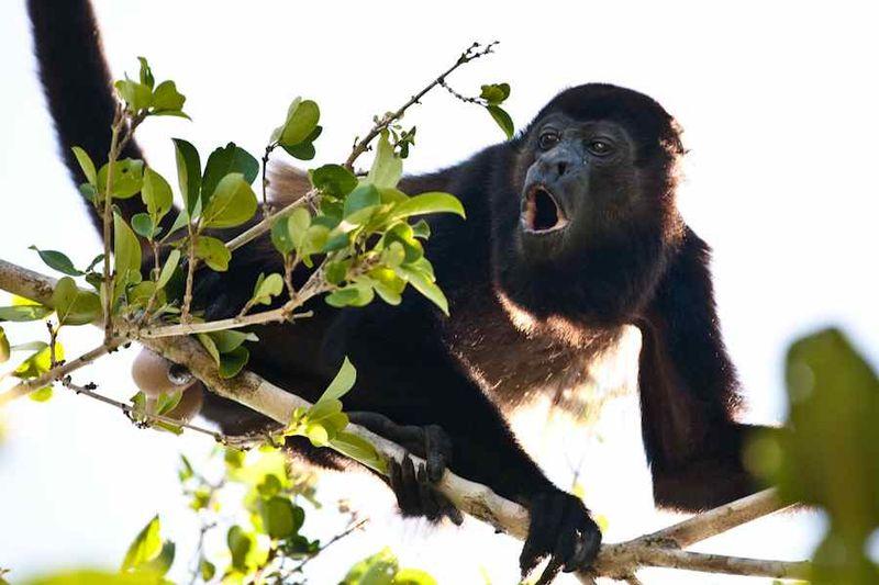 Seans monkey